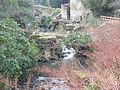 Jesmond Dene Mill 1159.JPG