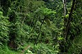 Jingualiao Stream Fish and Fern Trail (坪林金瓜寮魚蕨步道) - panoramio (1).jpg