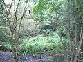 Jobscastle Gill at Lower Beeding, West Sussex.jpg