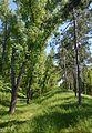 Kahovka Arboretum 13 (YDS 1348).jpg