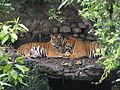 Kathmandu zoo Nepal (5085909627).jpg