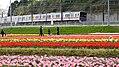 Keisei 3778 passing Sakura Tulip Festa 2017-09-17.jpg