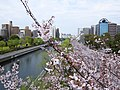 Kiba park , Koto ward - panoramio (1).jpg
