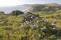 King Range National Conservation Area (18996816561).jpg