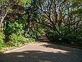 Kirstenbosch National Botanical Garden, Cape Town (P1060017).jpg