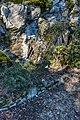 Klagenfurt Villacher Vorstadt Botanischer Garten Gagnepains Berberitze 29012018 2478.jpg