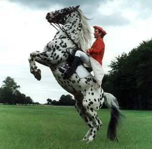 Rearing (horse) - A horse trained to rear.