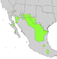 Koeberlinia spinosa range map.png