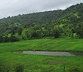 Konkan Railway - views from train on a Monsoon (6).JPG