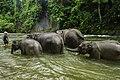 Konservasi Gajah Sumatera.jpg