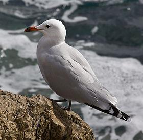 Μεγάλο πουλί καυτά νεοσσών