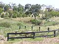 Kororoit Creek Cairnlea 2.jpg