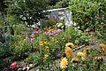 Kto przy Obrze temu dobrze – ogród nad Obrą - Zbąszyń - 001112c.jpg