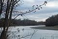 Kuban river in Ubezhenskaya 2020-11-30-1.jpg