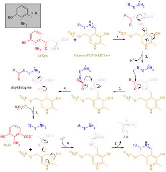 Kynureninase - Image: Kynureninase reaction