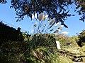 L'ile aux moines - panoramio (13).jpg