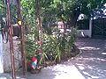 La umbra duzilor - panoramio.jpg
