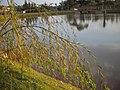 Lago no Pq. das Águas em Campinas S.P - panoramio.jpg