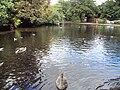 Lake, Coronation Park, Ormskirk - DSC09259.JPG