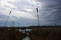 Lake Sinissippi - panoramio - NaturesFan1226.jpg