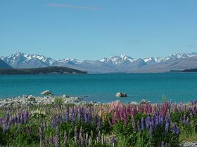 Image illustrative de l'article Lac Tekapo