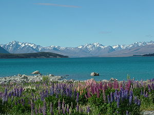 South Canterbury - Lake Tekapo, with Mount Cook and the southern Alps in the background