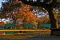 Landa Park Dance Slab autumn sunset.jpg