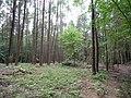 Landschaftsschutzgebiet Horstmanns Holz Melle -Im Wald- Datei 9.jpg