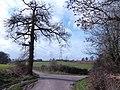 Lane forks at Shuts Grove - geograph.org.uk - 351509.jpg