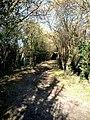 Lane to Hill Green Farm near Tinker's Lodge - geograph.org.uk - 130818.jpg
