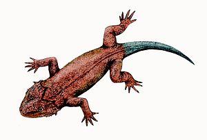 Diapsid - Image: Lanthanosuchus watsoni