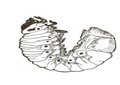 Larva de besouro.pdf
