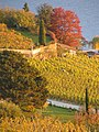 Lavaux in fall.jpg