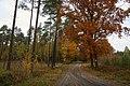 Leśna Droga - panoramio.jpg
