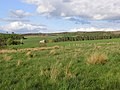 Lemmington Bank - geograph.org.uk - 427607.jpg