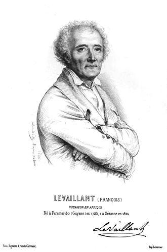 François Levaillant - Portrait