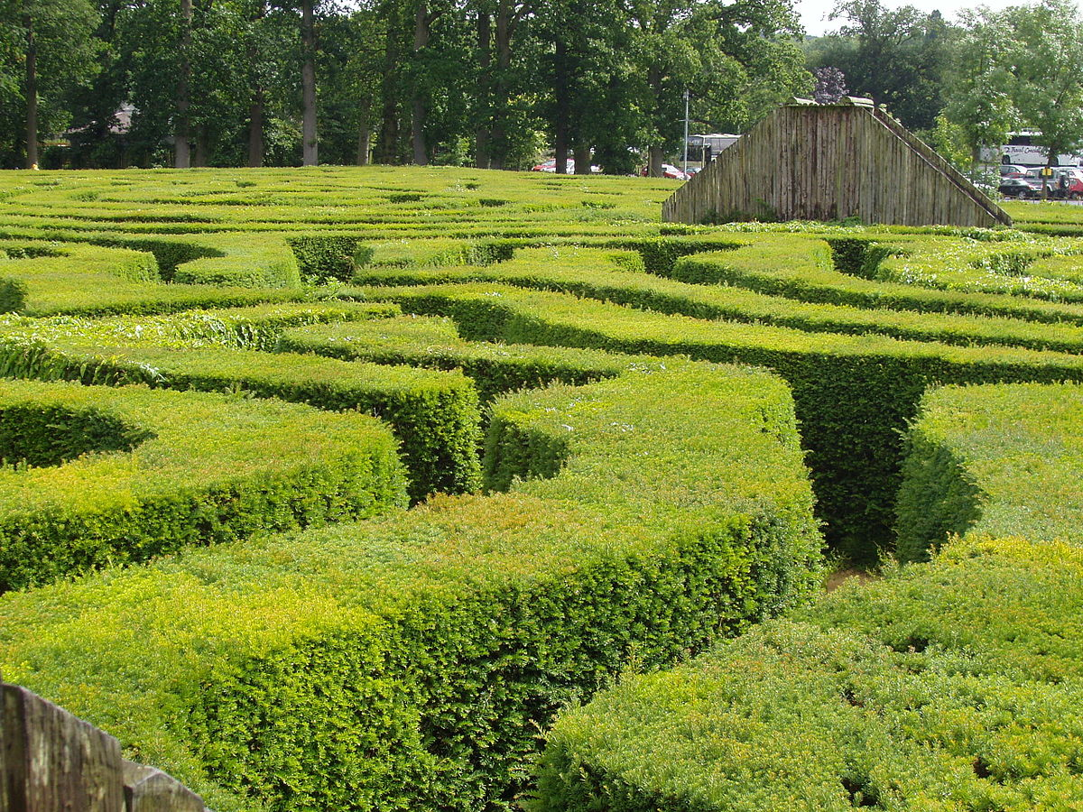Hedge Bushes: Wiktionary