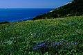 Look to the Sea 3, Krasnodar Region - panoramio.jpg