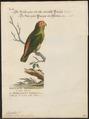 Loriculus indicus - 1700-1880 - Print - Iconographia Zoologica - Special Collections University of Amsterdam - UBA01 IZ18500280.tif