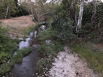 Alamitos Creek - Los Alamitos Creek Trail