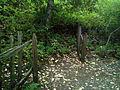 Los Trancos Fence 2- San Andreas Fault.jpg