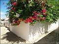 Loule (Portugal) (49836184158).jpg