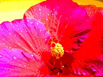 Posterization - Posterized photo of a hibiscus.