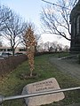 Luthereiche an der Christuskirche Winter (6).jpg