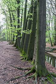 Münster, Wolbeck, Wolbecker Tiergarten, Angel -- 2014 -- 7135.jpg