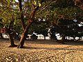 Magalawa Tent Site.JPG