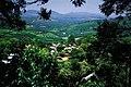 Magoebaskloof, Limpopo, South Africa (2417714031).jpg