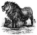 Male lion and mate.jpg