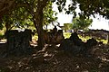 Malindi cemetery on Kilwa Kisiwani - 18th to 19th cents. (9) (28999761711).jpg