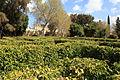 Malta - Attard - San Anton Gardens 33 ies.jpg